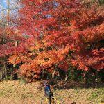 紅葉とロードバイク